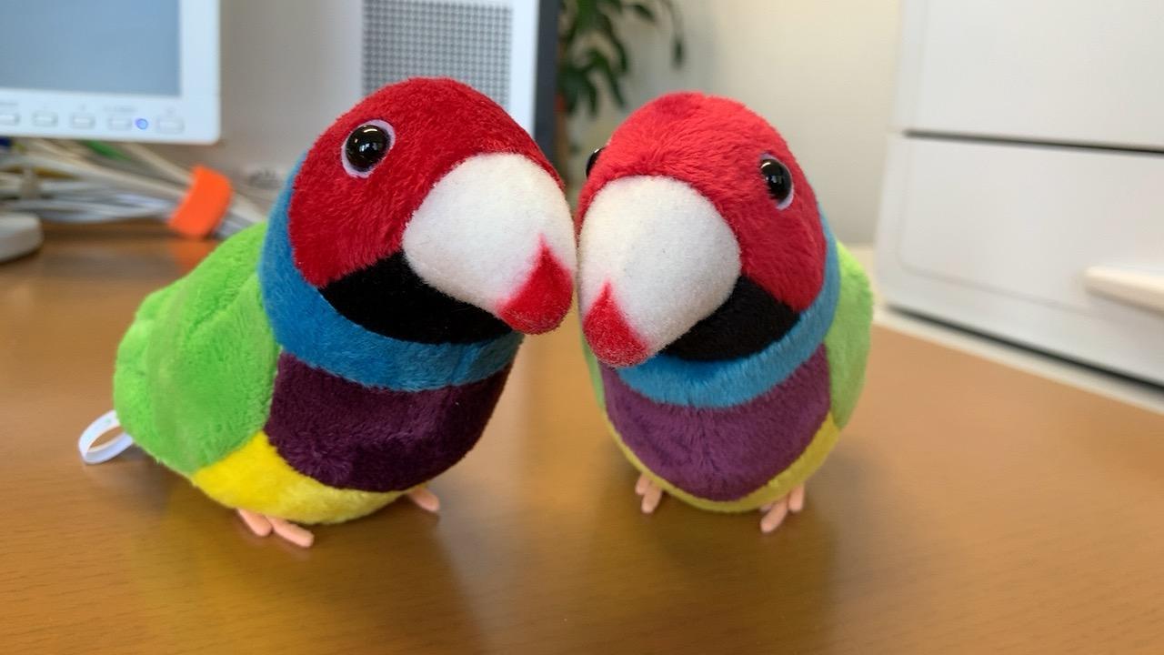 会社デスクの上の鳥さんカップルです。かわいいですね。男のくせに鳥さんが好きです